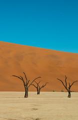 IMG_8557 (Tatjana_Schmid) Tags: namibia sossusvlei deadvlei wüste desert sand sanddunes dünen africa afrika landschaft landscape reise holiday urlaub travel