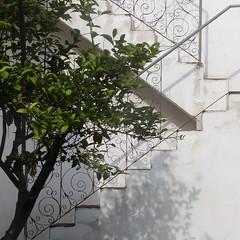 steps and shadows at casa ramirez II (msdonnalee) Tags: courtyard tree stairs stairway escala escalera escalier treppen ignacioramirez 1818birthplaceofignacioramirez sanmigueldeallende elnigromante