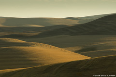Hills of the Palouse (David J. Greer) Tags: bcpa photo workshop adventure travel palouse washington morning hills round smooth patterns vista fall