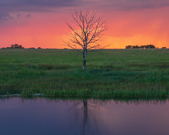 Trinity - Unity, Saskatchewan (WherezJeff) Tags: saskatchewan sunset unity canada tree solitary solo prairie slough reflection d850
