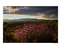(david Ramalleira) Tags: davidramalleiraphotography davidramalleira nikon landscape landscapes paisaje nature naturaleza natureart naturephotography naturesfinest naturesart natura spring primavera