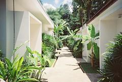 Silk Dangkor Boutique Hotel (Shoji Kawabata. a.k.a. strange_ojisan) Tags: lca lomography cn 800 35mm film filmphotography filmphoto photo analog analogphoto analogphotography hotel cambodia siemreap 2017 may southeast asia filmcamera analogcamera trip holiday garden architecture