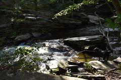Summer adventures (natalie_iwasz) Tags: river creek water waterfall cascade cascades tree trees forest woods rock stream adventure dog black lab summer light nikon nikond3400 beginner green