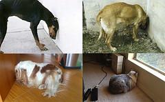 Atenção! Se seu cão está fazendo isso, leve o ao veterinário com urgência (Meu.DOG) Tags: animais bemestaranimal cachorros cães convulsões cuidadospet curiosidades dicaspet dog encefalite hiponatremia infecçãoviraloufúngica informação intoxicaçãoemcães meudog parasitas pets petshop raiva saúdeanimal sindromedopressionamentodecabeça tumoresemcães veterinarios