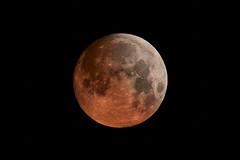 Met een beetje fantasie (zsnajorrah) Tags: moon fullmoon bloodmoon mooneclipse simulation blending fromthebalcony manfrotto redged canon 7dmarkii ef70200mmf4l ef2xiii netherlands haarlem