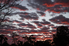 "Australian sky at dawn above the Red Centre (Mario Graziano) Tags: ghan northernterritory australia au nofilter nofilterneeded nofilters ""northern territory"" erldunda outback entroterra ""back beyond"" bush ""red centre"" ""stuart highway"" ""national highway 87"" a87 cielo sky ""dramatic sky"" ""moody cloud clouds sunrise dawn"