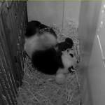Panda Mei thumbnail