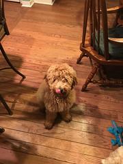 Penny's adorable boy Bailey!