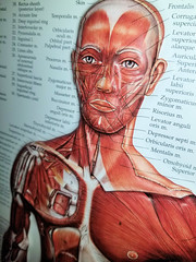 Novant Health Doctor Office (Philip Osborne Photography) Tags: examination room anatomy chart face chest muscle