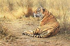 Alarm Call Bengal Tiger (alanmhunt) Tags: art fineart paintings alanmhunt wildlife wildlifeart wildlifeartist wildlifepaintings tiger tigers bengaltiger bigcats cat cats