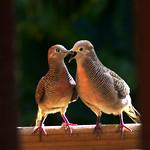 Kiss-me-quick