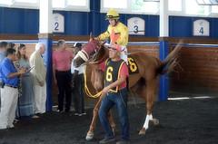 "2016-08-19 (7) r1 Jorge Perez on #6 Morning Vow (JLeeFleenor) Tags: photos photography md maryland marylandracing marylandhorseracing jockey جُوكِي ""赛马骑师"" jinete ""競馬騎手"" dżokej jocheu คนขี่ม้าแข่ง jóquei žokej kilparatsastaja rennreiter fantino ""경마 기수"" жокей jokey người horses thoroughbreds equine equestrian cheval cavalo cavallo cavall caballo pferd paard perd hevonen hest hestur cal kon konj beygir capall ceffyl cuddy yarraman faras alogo soos kuda uma pfeerd koin حصان кон 马 häst άλογο סוס घोड़ा 馬 koń лошадь paddock"