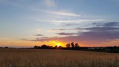 Sunset, temperature 25 degrees, no wind - it does not get much better :-) (mgreiersen) Tags: cellphone samsung sunset sun field trees clouds denmark summer sky atmosphere