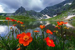 orange flowers (Plamen Troshev) Tags: rocks mountain landscape lake snow flowers waterfall reflection adventure new nature sky clouds 7th lakes