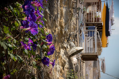 Wallflowers (janmalteb) Tags: italy italien nepal naples napoli vesuv vesuvio city stadt skyline himmel sky blue blau wolken hafen green grün baum tree haus gebäude canon eos77d tamron 18200mm balkon balcony urban