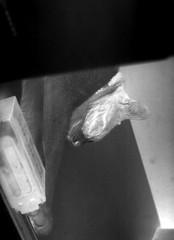 IMG_20180709_0008 (Dinasty_Oomae) Tags: トプコン topcon トプコンpr topconpr 白黒写真 白黒 monochrome blackandwhite blackwhite bw outdoor 千葉県 千葉 船橋市 船橋 chiba funabashi cat 猫 ネコ nega nagativeimage ネガ