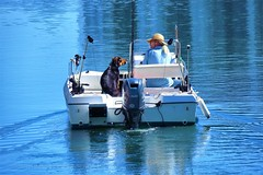 Where Are We Going? - ¿A Dónde Vamos? (Konny :-))) Tags: motorboat motorboot motoscafo bateauàmoteur motora embarcaçõesamotor dog hund cane perro cachorro