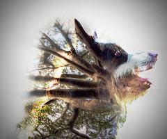#InspiraciónBdF69: Desde lo más profundo (celemirosotichez) Tags: inspiraciónbdf69 spiritofphotography