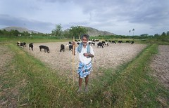 MR Goatee (mail.raharsha) Tags: sheep tamilnadu guardian green farmer goat goatee goats shepherd
