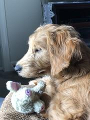 LuLu one of Gingers sweet girls