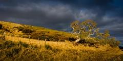 Our land abounds in nature strips (jenni 101) Tags: tasmania landscape misinterpretationofournationalanthemn nikond7200 photographybyjen shouldbenaturesgifts sigma1020mm winterinaustralia