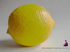 The answer's a lemon (amy's antics) Tags: wah wearehere lemon large huge minime superlatives