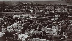Winnipeg Stockyard (vintage.winnipeg) Tags: winnipeg manitoba canada vintage history historic