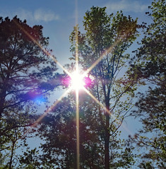 Sunlight. (dccradio) Tags: lumberton nc northcarolina robesoncounty outdoors outside sun sunshine sky bluesky nature landscape natural tree trees foliage greenery starburst sunlight leaf leaves cloud clouds backyard sunburst canon powershot elph 520hs treebranch treebranches branches treelimb treelimbs flare flickrfriday