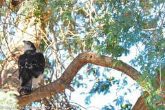 DSC_8832-2 (paul mariano) Tags: paulmarianocom paul mariano allrightsreserved namibia wildlife photography animals africa