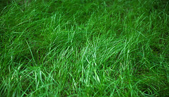 Young Green Grass (dejankrsmanovic) Tags: green grass growth plant land ground aside abstract background pattern field simple vivid summer spring garden meadow playground concept simplicity healthy nature natural outdoors