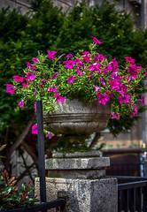 Happy Friday! :-) (3OPAHA) Tags: pink flowers sony explore