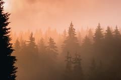 SAM_2957 (Apostol Dragiev) Tags: rodopimountain rodopi sunrise forest fog