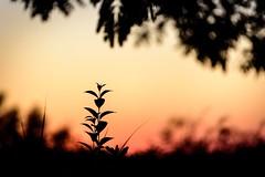 It is arriving 🌞 (NathalieSt) Tags: europe france hérault lagrandemotte languedocroussillon occitanie leverdesoleil nature nikon nikond750 nikonpassion nikonphotography sunrise