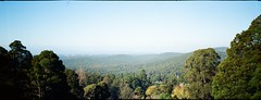 Dandenong Ranges National Park (Matthew Paul Argall) Tags: anscopixpanorama fixedfocus 35mmfilm plasticlens halina haking mountainview kalorama kodakultramax400 kodak400 ultramax 400speedfilm 400isofilm panorama panoramic