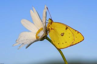 *a dream of a summer day for butterflies*