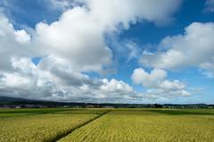 雲 (fumi*23) Tags: ilce7rm3 sony 12mm samyang12mmf20ncscs cloud sky samyang field ricefield rice agriculture miyazaki japan country countryside a7r3 emount manualfocus apsccrop 雲 空 ソニー 宮崎 水田