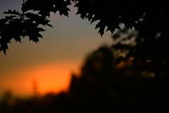 Silhouetted Dusk (flashfix) Tags: silhouetted dusk june302018 2018inphotos ottawa ontario canada nikond7100 55mm300mm flashfix flashfixphotography nature mothernature leaves silhouette bokeh sunset twilight
