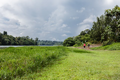 20180622-5D4_0808 (shutterblades) Tags: bukittimahnaturereserve macritchiereservoir macritchietrail sicc scenery singaporeislandcountryclub tracking treetopwalk windsornaturepark