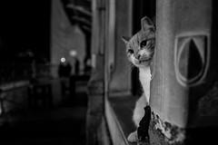 curious (㋡ Aziz) Tags: cat cute curious street night lowlight bw mono blackandwhite dark funny stone city fujifilm 16mm xt2 streetart black white grey 3d bokeh dof