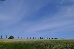 Van Swinderenweg (jehazet) Tags: landschap landscape trees akker bomen groningenprovincie jehazet