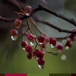 Despues de la lluvia thumbnail