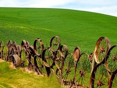 Alfalfa (amarilloladi) Tags: clouds dahmenbarn fence wheels wagonwheels rust rustic fencedfriday hff 7dwf alfalfa crops agriculture uniontownwa pacificnorthwest washington palouse palouseregion flora