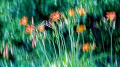 Lily's Abstract (Bob's Digital Eye) Tags: abstract blur bobsdigitaleye canon canonefs55250mmf456isstm flowers garden gardenflowers green handheld july2018 lily longexposure motionblur ndfilter orange t3i bobsdigitaleye2