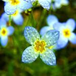 Wet Blue Bells thumbnail