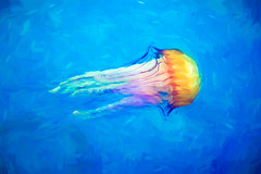 5696TS Swimming Free (foxxyg2) Tags: fish jellyfish blue sea harbour pacific water colour monterey california topaz topazsoftware topazstudio