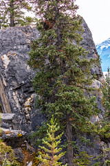 Mt Abraham gully,  Banff National Park (aud.watson) Tags: canadianrockies albertasrockies banffnationalpark highway11 davidthompsonhighway northsaskatchewanriver mtabrahamgully mountain mountains valley valleys peaks cliffs glacialvalley lake water glaciallake forest wood tree trees conifers pine pines fir spruce rock rocks stone stones pebbles boulders bighorncountry gully canyon erosion stream canyonwalls sky cloud clouds landscape clearwatercounty alberta canada ca