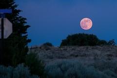 Beeeeautiful Evening Moon (Anna Gurule) Tags: beautifulmoon orangemoon dusk evening bluesky artedgy annagurule annaortizgurule