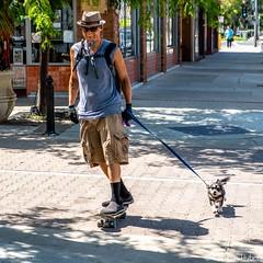 Santa Ana - Walking the Dog (www.karltonhuberphotography.com) Tags: 2018 citystreets dog dude happy karltonhuber man peoplewatching santaana sidewalk skateboard skateboarder southerncalifornia streetphotography streetscene transportation