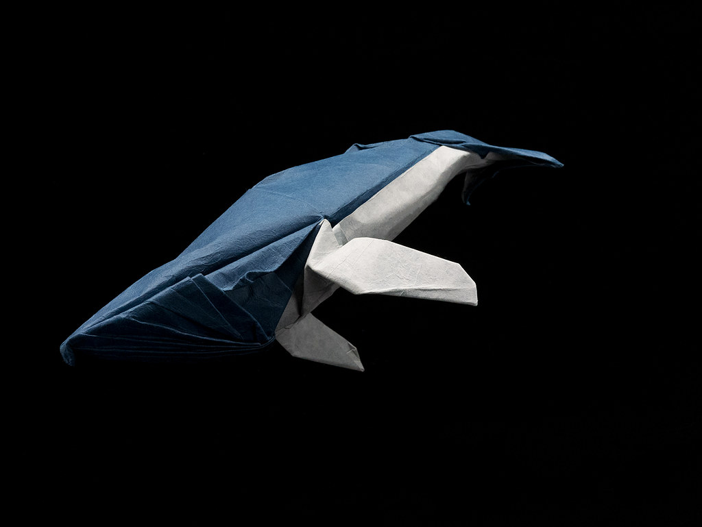 Humpback Whale Rami Origami Tags Baleine Bosse