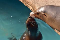 mother and child (ekato gifu) Tags: zoo higashiyama seal
